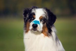 Holi Dogs (2)
